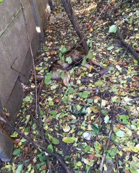 SESIZARE: În curtea Poliției de Frontieră Sighet s-au otrăvit câțiva câini. ITPF Sighet infirmă