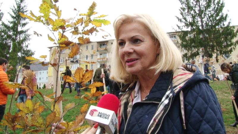 ACȚIUNE PENTRU CENTENAR: Președintele ALDE Maramureș, Cornelia Negruț, la plantat de stejari