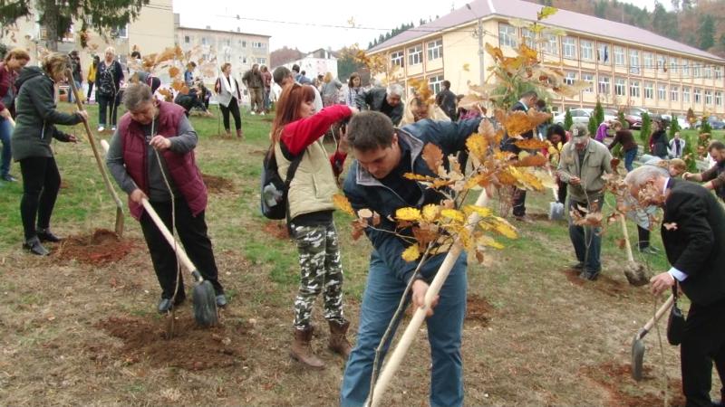 REPORTAJUL ZILEI: O sută de stejari plantați la Cavnic