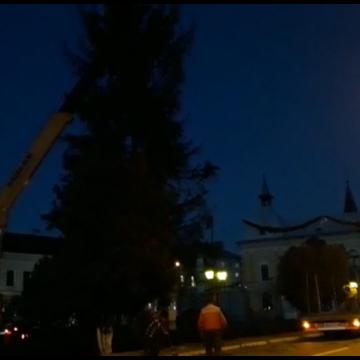 Pomul de Crăciun a ajuns în Sighet