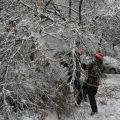Pagube însemnate și în pădurile Maramureșului în urma fenomenelor meteo extreme de la începutul lunii