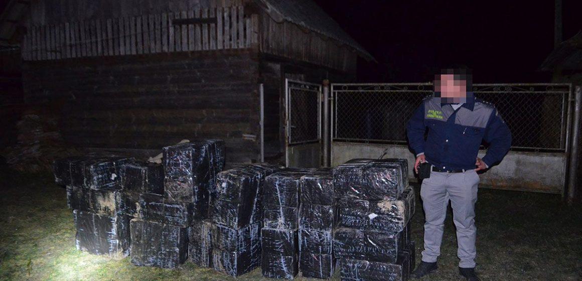 Video | Zece mii de pachete cu țigări de contrabandă găsite într-o anexă