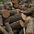 Controale pentru combaterea tăierilor ilegale de arbori