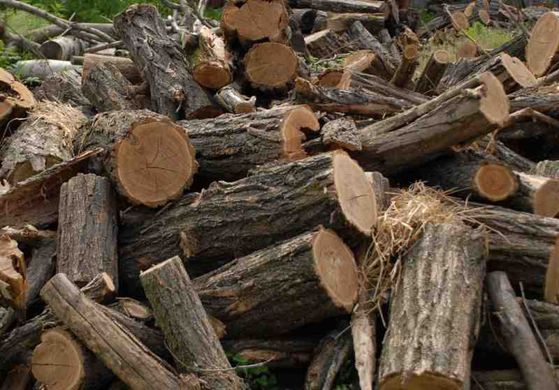 Hoț de lemne prins