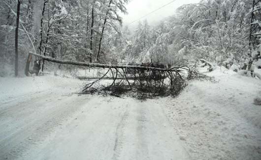 Copaci prăbușiți sub greutatea zăpezii pe DJ 183, Valea Neagră-Izvoare