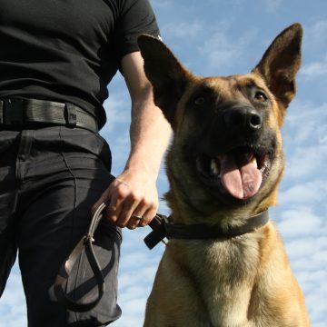 VIDEO | Zeci de infractori prinși cu ajutorul câinilor polițiști