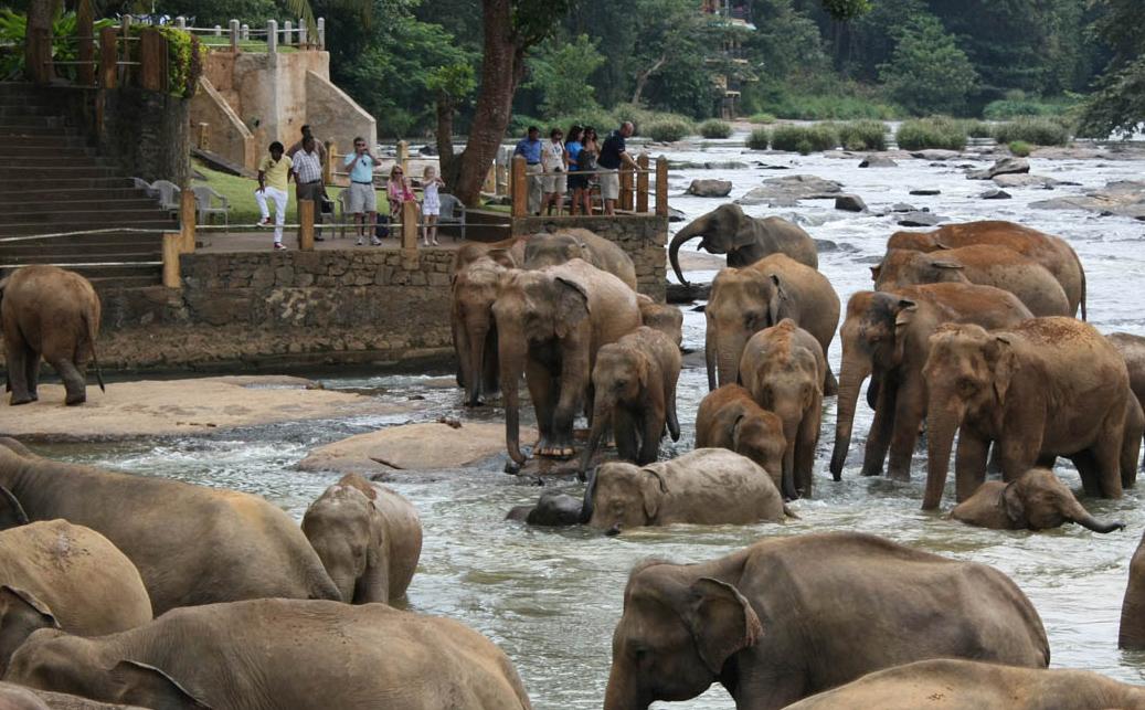 sri lanka ceylon 4 orfelinat elefanti pinnawala