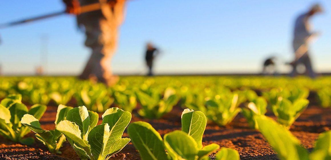 Crina Chilat (PSD): Nu se plafonează subvențiile pentru agricultură