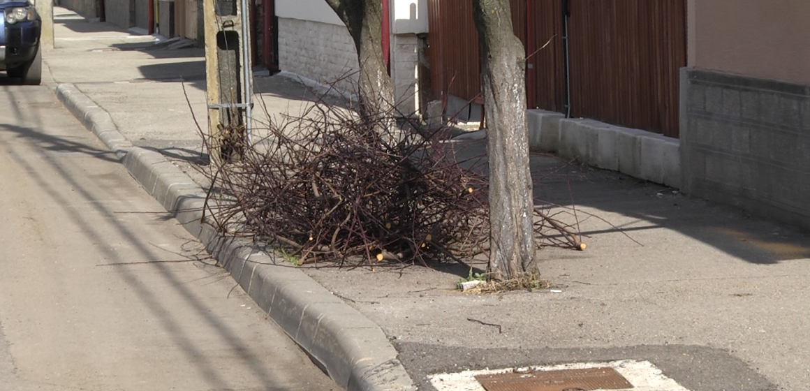 Campania de colectare a deșeurilor vegetale s-a încheiat. Cei care le vor mai scoate în stradă riscă sancțiuni