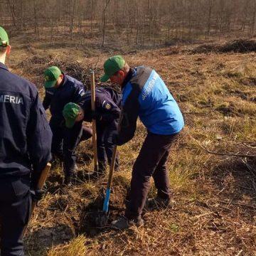 VIDEO | Jandarmi la plantat de arbori