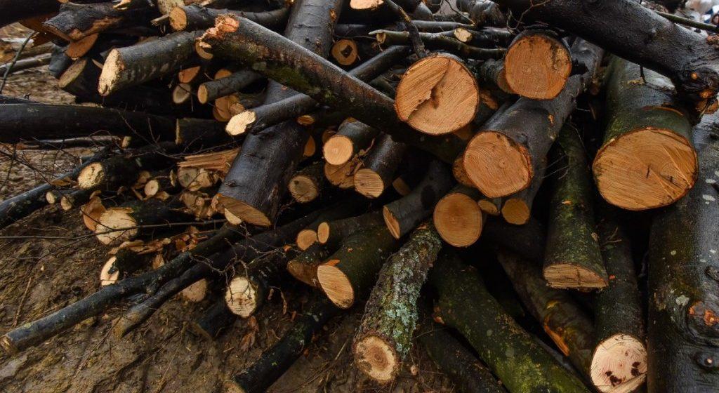 Depistat în timp ce transporta ilegal material lemnos