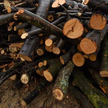Video|Aproape 10 mc de lemne confiscate dintr-o autoutilitară și trei căruțe