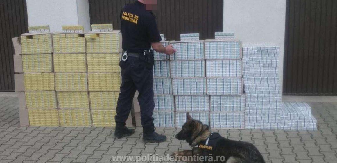 Percheziții domiciliare în Maramureș, două persoane au fost reținute