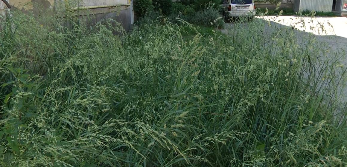 Spații verzi neîngrijite, crește iarba în neștire