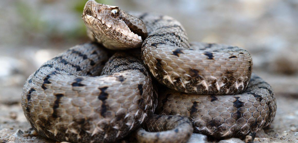 VIDEO | Atenție la șerpi! Ce ne sfătuiesc salvamontiștii
