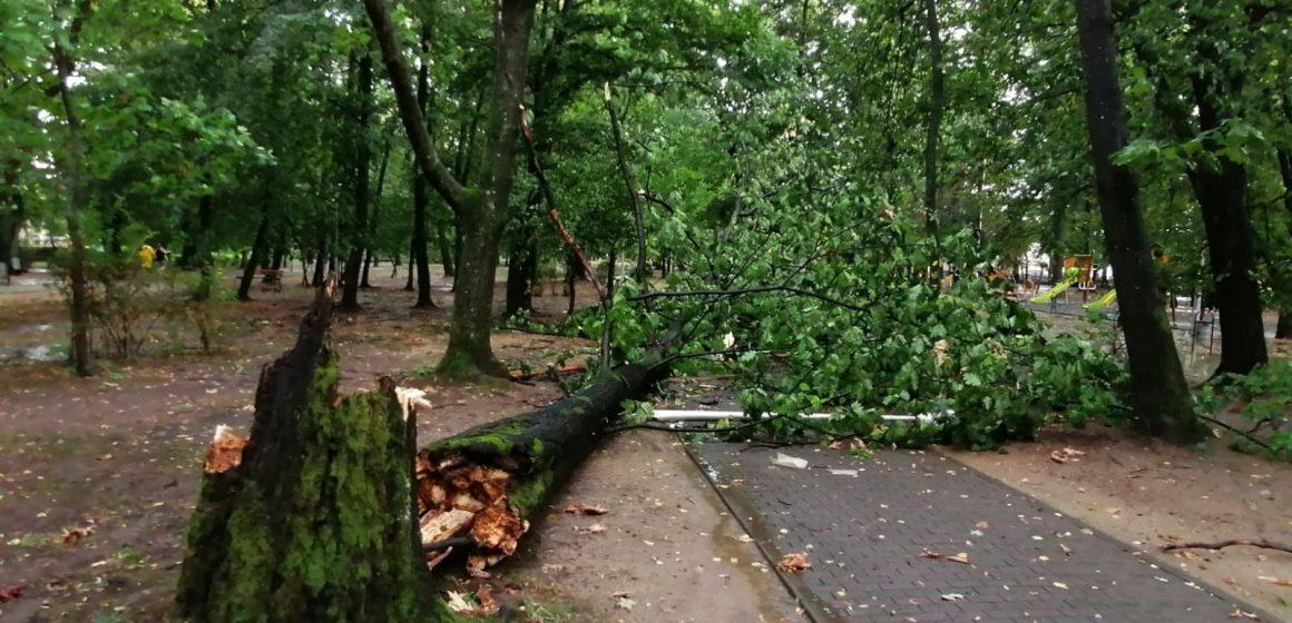 GALERIE FOTO | Cod galben de vreme rea – vântul puternic a pus copaci la pământ în Baia Mare
