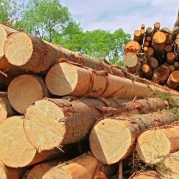 Transporta mai mult lemn decât scria în acte și avea și permisul suspendat