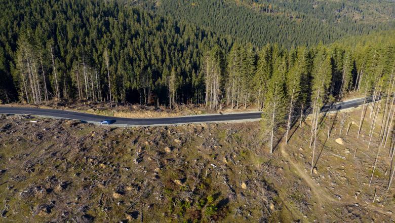 Se taie anual 38,6 milioane metri cubi de lemn, dublu față de cifrele oficiale