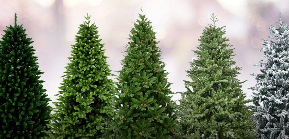 Direcția Silvică Maramureș scoate la vânzare 1305 pomi de Crăciun
