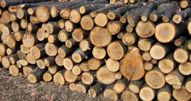 Prețul lemnului de foc pentru populație a scăzut în ultimul an la Direcția Silvică Maramureș