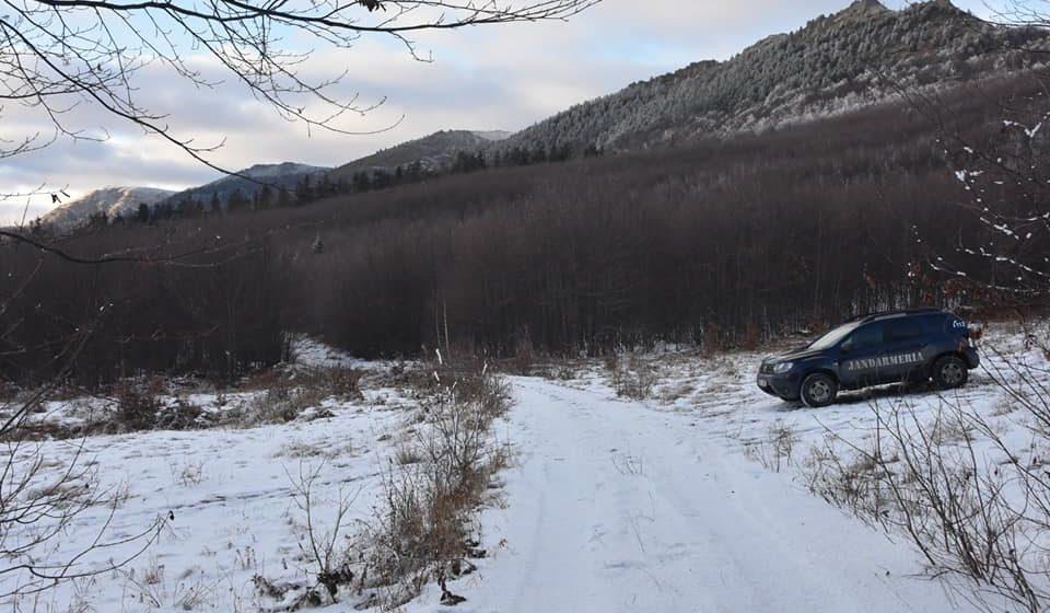 Tăieri ilegale de arbori în zona Șomcuta Mare