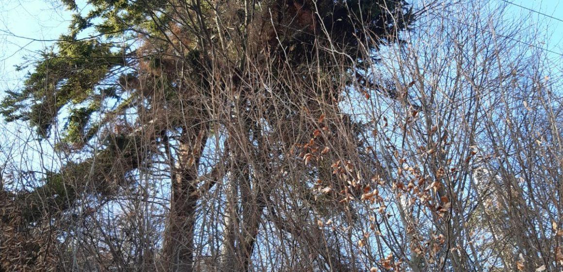VIDEO | Bilanțul stricăciunilor făcute de vânt în Maramureș