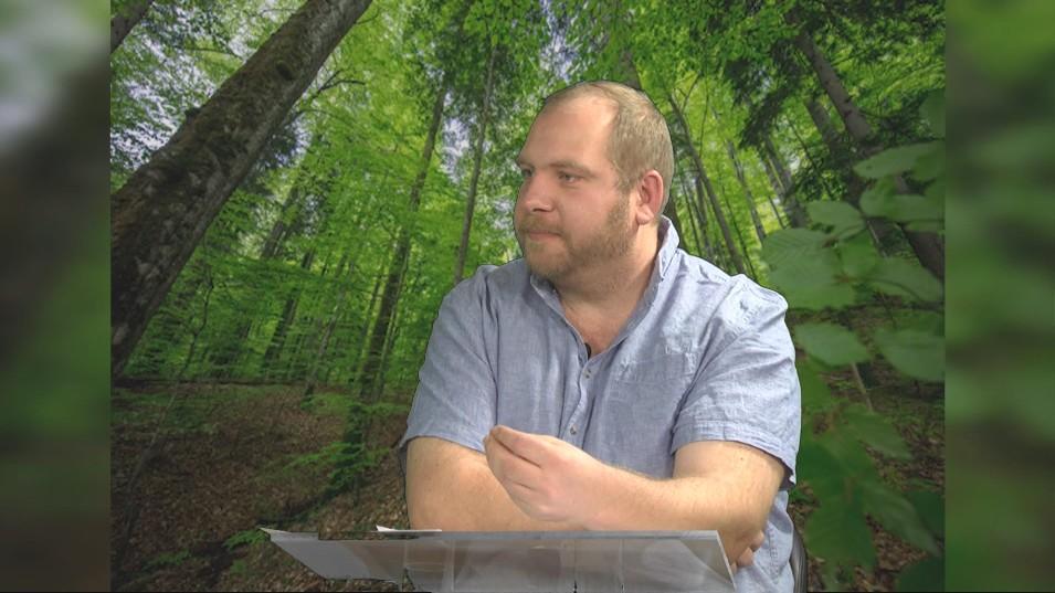 Cum valorificăm eficient lemnul tăiat legal din pădure?