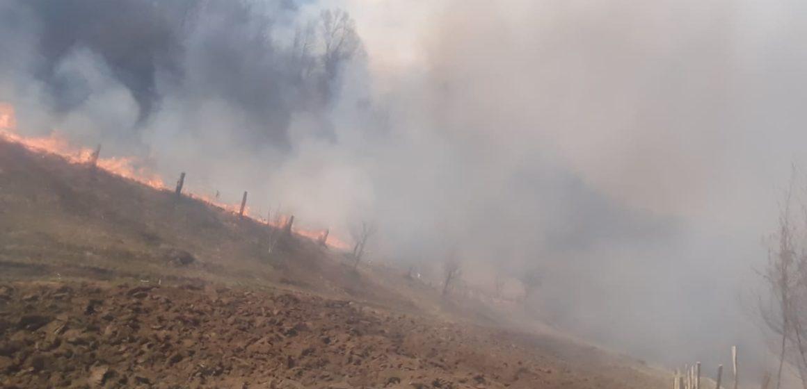 VIDEO | Incendiile de vegetație uscată nu ocolesc nici Ieudul