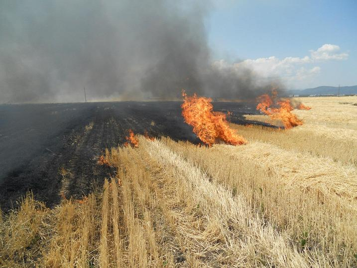 VIDEO | Primarul comunei Bârsana face apel la cetățeni să nu folosească focul deschis pentru curățarea terenurile