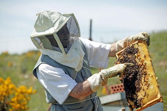 VIDEO | Până în 26 mai, apicultorii pot depune cereri la APIA, pentru a beneficia de sprijin financiar
