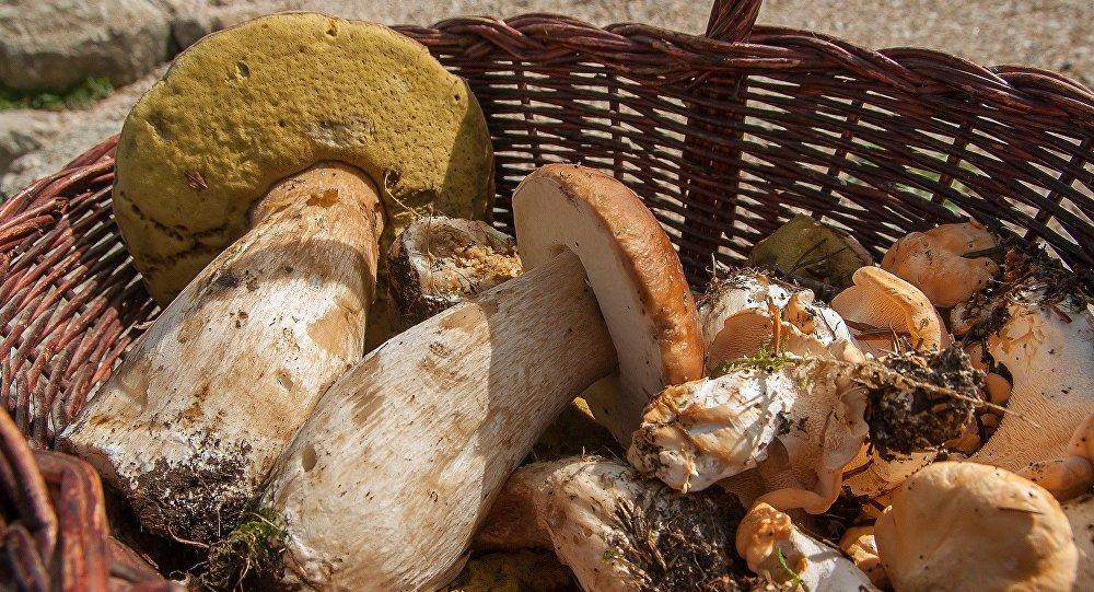 6 maramureșeni au ajuns la spital după ce au consumat ciuperci