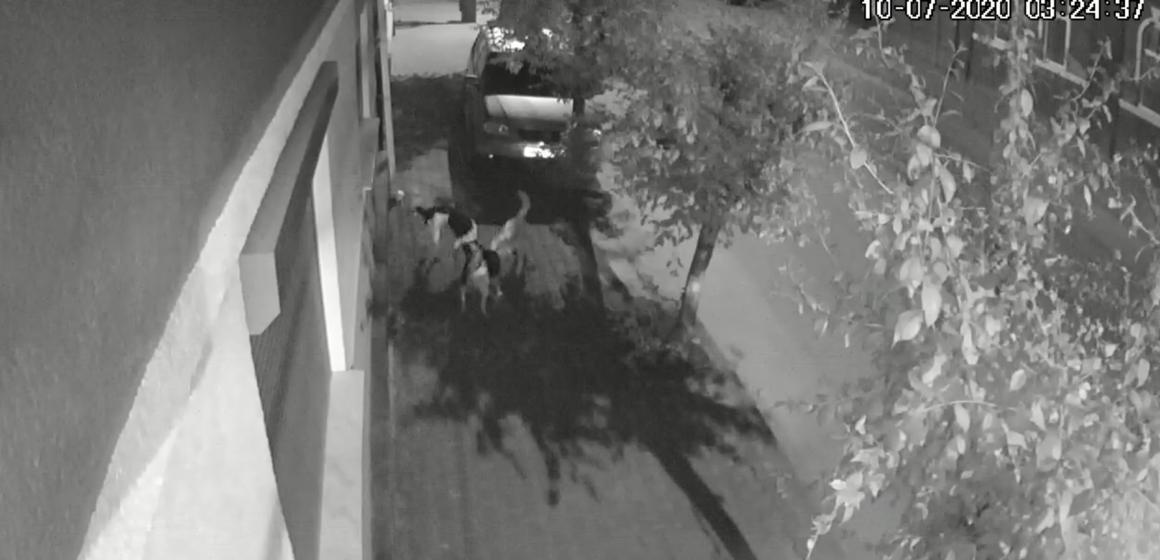 VIDEO | Pisică sfâșiată de o haită de câini pe strada Nicolae Titulescu din Sighetu Marmației