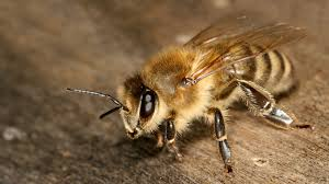 VIDEO | Apicultorii români vor primi și-n acest an un ajutor de minimis pe familie de albine