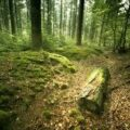Statul român ar putea pierde 5% din păduri! Avertizare lansată către Iohannis