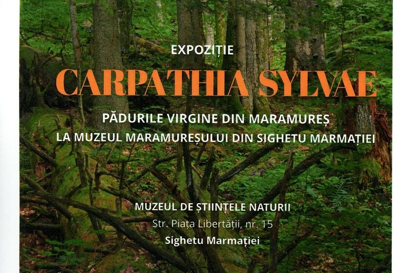 "VIDEO |  Vernisaj la Muzeul Maramureșan – expoziția – ""CARPATHIA SYLVAE. Pădurile virgine din Maramureș"""