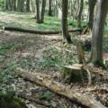 VIDEO | Un pădurar din Maramureș a fost amenințat în timp ce își exercita atribuțiile de serviciu