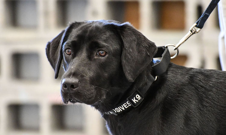 Poliția de Frontieră Sighetu Marmației cedează gratuit către alte instituții publice un câine de serviciu