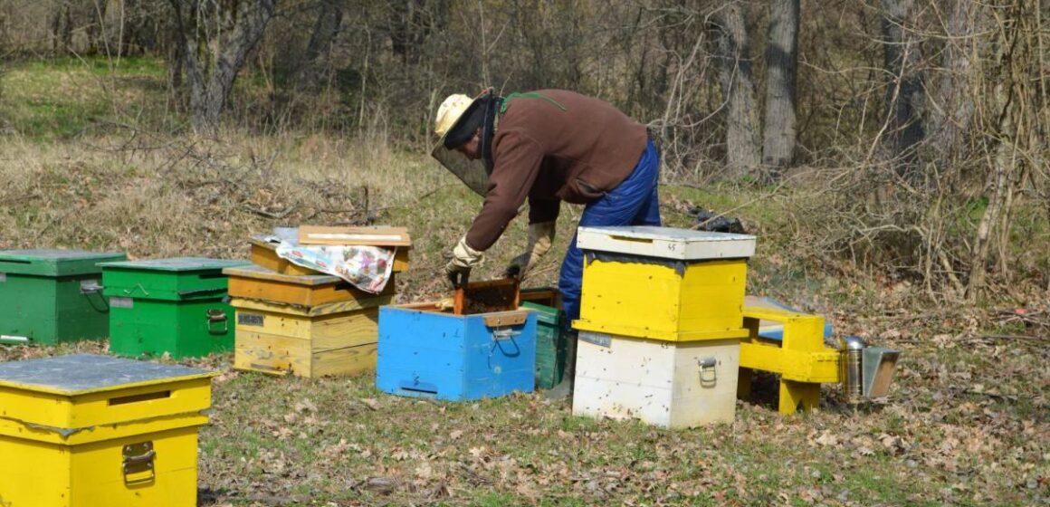 Plăți pentru apicultori