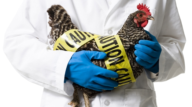 VIDEO   Măsuri de prevenire a gripei aviare