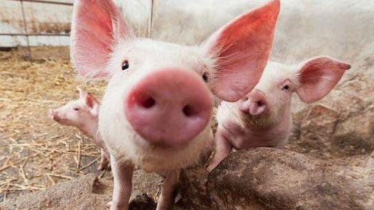 VIDEO | DSVSA: Achiziționați produse alimentare doar din unități autorizate