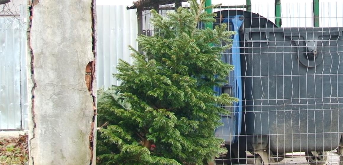 VIDEO | Străzi împodobite cu brazi abandonați