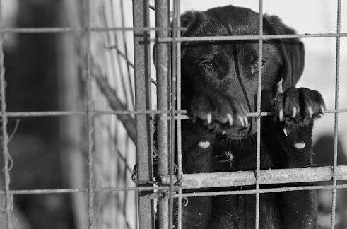 VIDEO | TÂRGU LĂPUȘ: Câini ținuți în captivitate în condiții improprii, ridicați de polițiști
