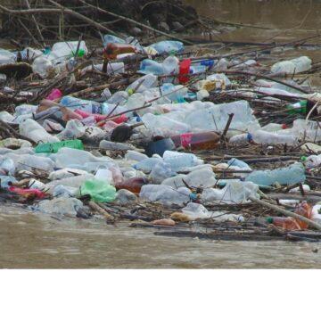 VIDEO | La Sighet, se caută soluții, dar și vinovații pentru problema pet-urilor aduse de ape