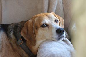 VIDEO   IPJ MARAMUREȘ: Şi animalele au dreptul la un tratament sănătos