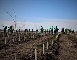 VIDEO | Romsilva va planta circa 20 milioane de puieti forestieri in campania de impaduriri de primavara