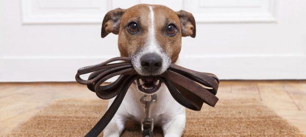 VIDEO   Măsuri speciale pentru câinii ținuți în lanț
