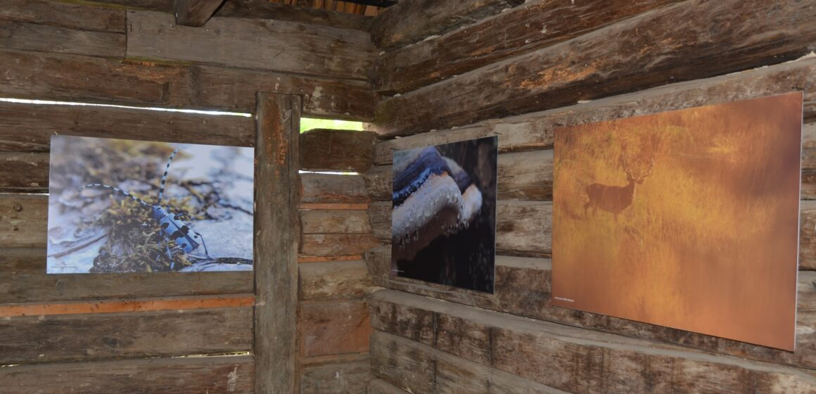 """Expoziție de fotografie """"Pădurile seculare de la Strâmbu Băiuț""""- la Muzeul Satului din Sighet"""