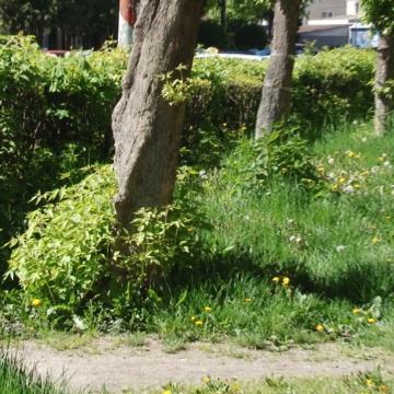 VIDEO   (FOTO) Sighetu Marmației, deficitar la îngrijirea spațiilor verzi