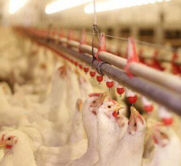 Măsuri dispuse pentru a preveni răspândirea gripei aviare