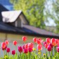 Prognoza ANM pentru luna mai. Schimbări bruște ale vremii, zilele călduroase vor alterna cu cele cu temperaturi sub normalul perioadei